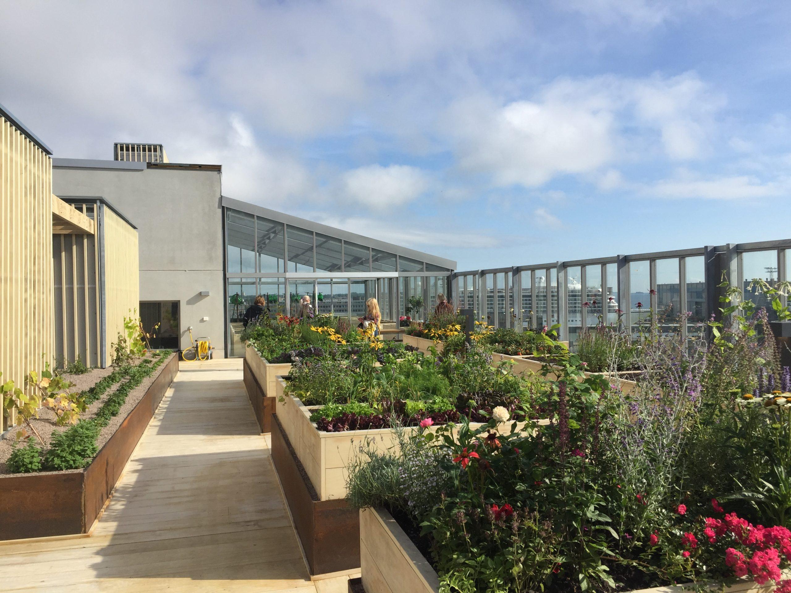 Vihreistä vihrein -kohteen katolla sijaitsee puutarha